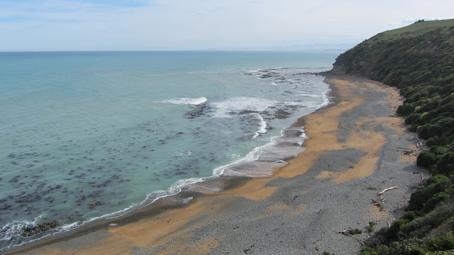 Beautiful coastline at Bushy Bay, but no yellow-eyed (hoi hoi) penguins spotted.