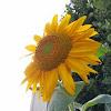 http://lh6.googleusercontent.com/-VfcElUQqT0k/AAAAAAAAAAI/AAAAAAAAAAA/ZbqgflkEFQ8/s100-c-k-no/photo.jpg