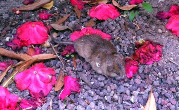 dead critter