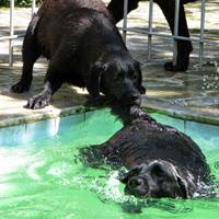 Dicas agua cachorro piscina