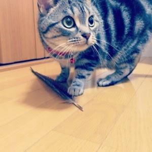 猫 おもちゃ 羽
