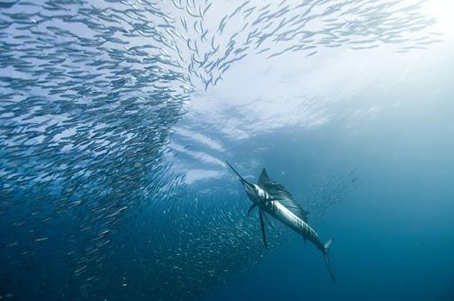 best underwater picture