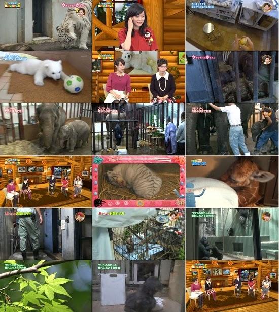 [TV-Variety] 前田敦子 – こんにちは!動物の赤ちゃん 2014 141224