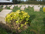 Gallipoli - cemetary for fallen Australians