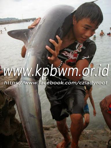 seorang anak yang memanggul ikan hiu