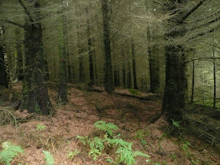 Thornthwaite Forest