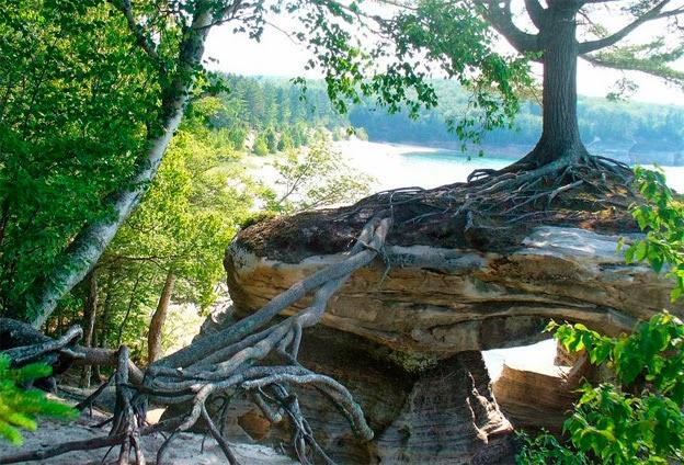 El puente de raíces que fabricó el árbol