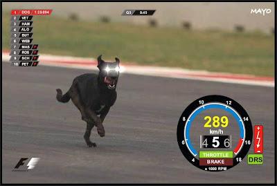 онбоард собаки на Гран-при Индии 2011