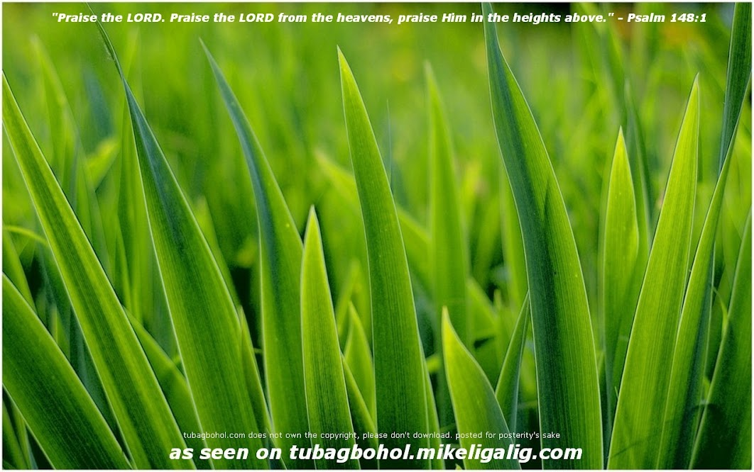 free-pictures-wallpaper-photos-online-download-desktop-background-Images-00048 - Pure Green Leaves - Photos Unlimited