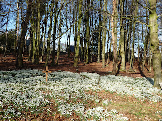 First view of the Snowdrops at Calwich Abbey
