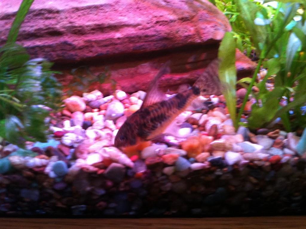 Cell phone pictures of my 75 gallon tank IMAGE_15D9A8FC-F8FF-4413-9A00-2162F19EC943