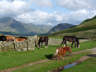 Cows and Horses.