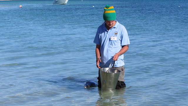 A volunteer feeding one of the dolphins.