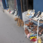 the lonely shoe dog