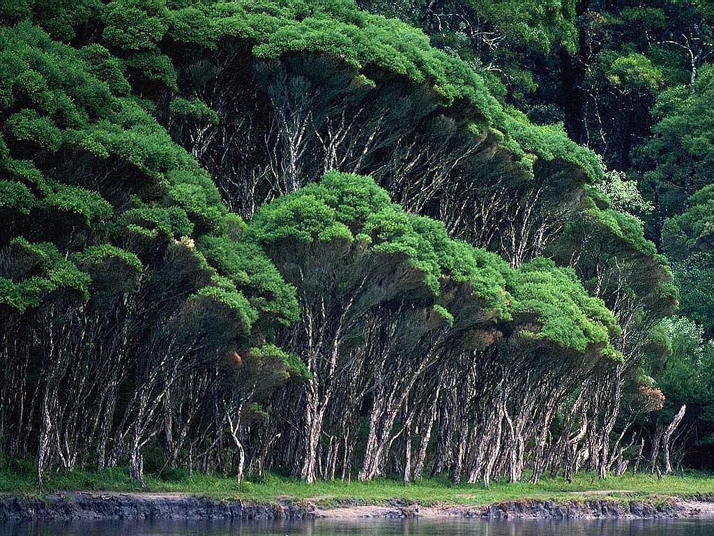 CoolPictureGallery: Photographs and Beautiful Dense Tropical Forests