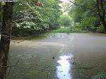 Kurz danach noch ein kleiner Tümpel im Wald, die Wasseroberfläche komplett mit Pollen bedeckt ...