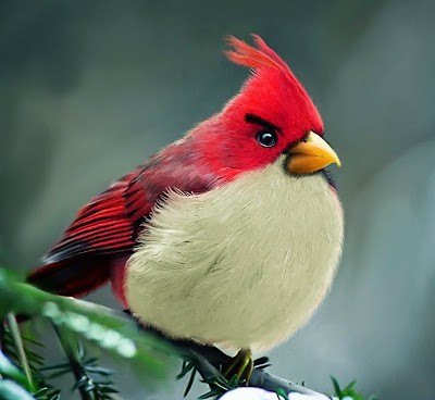 Natural Angry Birds by Mohammed Raoof Seen On www.coolpicturegallery.us
