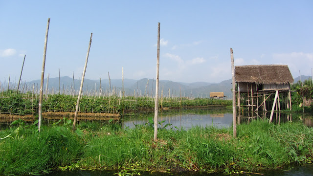 Large-scale aquaculture is threatening Inle Lake.
