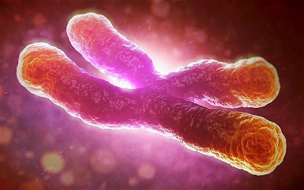 Health Tips: Important how cells copy chromosomes for fighting cancer