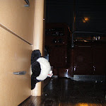 Poor panda got caught when the slide out closed in