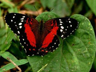 Foto de una mariposa