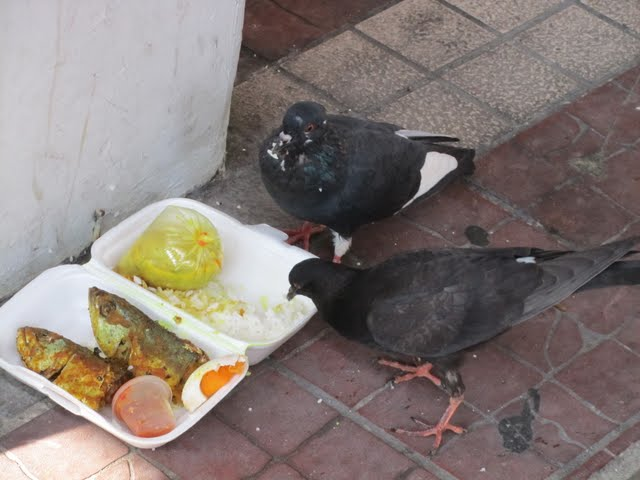 food for hungry birds in China town, KL