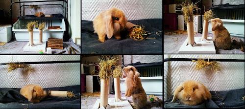 Игрушки для декоративного кролика своими руками фото
