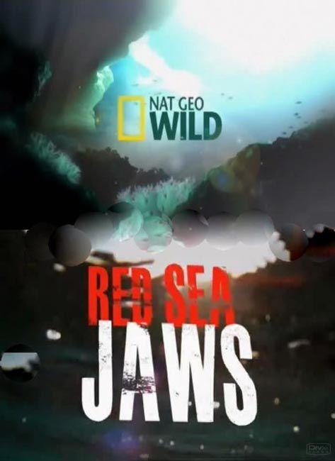 Szczêki z Morza Czerwonego / Red Sea Jaws (2011) PL.TVRip.x264 / Lektor PL