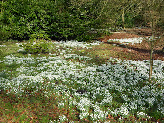 First View Of The Snowdrops