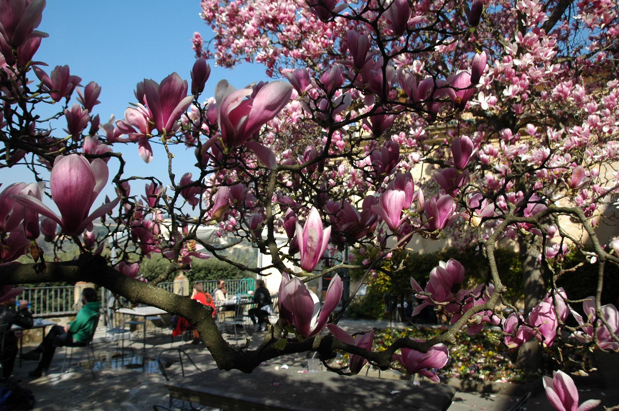Wiosna c.d.