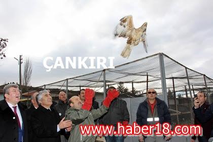 Fidanlık Keklik Üretim İstasyonu ve Kenbağı Tabiat Parkında İncel