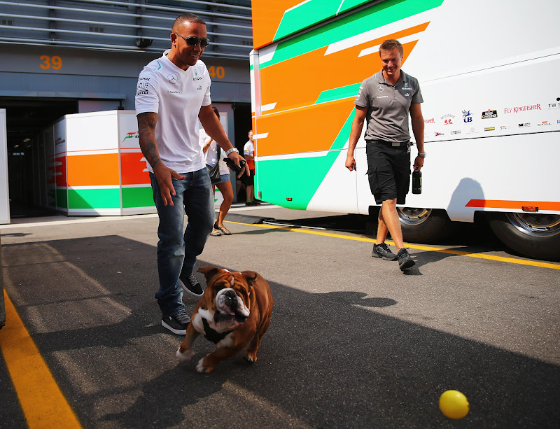 Льюис Хэмилтон выводит свою собаку Роско на прогулку по паддоку Монцы на Гран-при Италии 2013