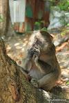 Phi Phi islands - Monkey beach / Острова Пхи Пхи - Пляж обезьян