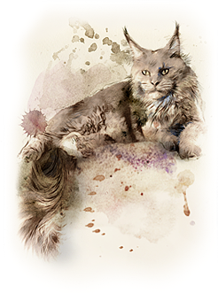 Питомник кошек мейн-кун Grey Claw`s