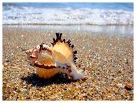 داستانک ساحل و صدف
