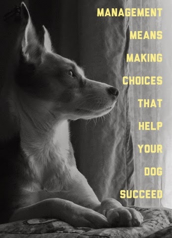 helping your dog succeed