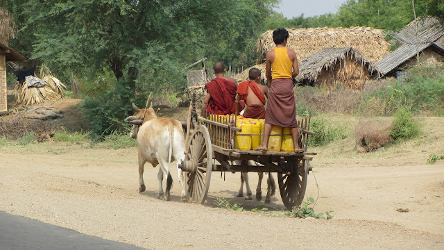 Monks hitching a ride with the ox cart.