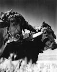 Yunta catraleña . Años 50. 1º Premio y Medalla de Oro en el concurso nacional de fotografía del S.E.M. Año 1950. (Arch. Foto de D.Francisco Oliver Forner). Biblioteca Municipal de Catral.