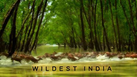 Magiczne Indie / Wildest India (2010) PL.TVRip.x264 / Lektor PL