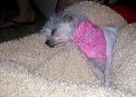 Delilah's had a hard day