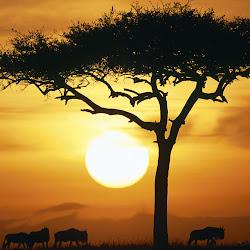 Foto-Foto Kehidupan Alam Liar Afrika Seen On www.coolpicturegallery.us