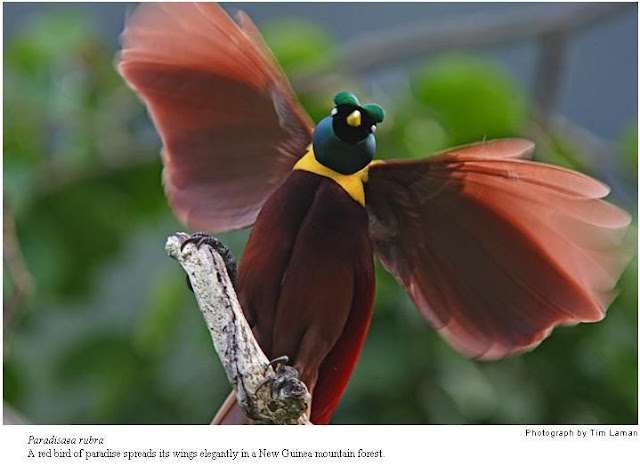 Different Feather and Tail Birds Seen On www.coolpicturegallery.us