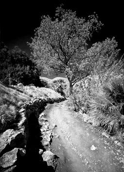 Riserva Naturale dello Zingaro trail