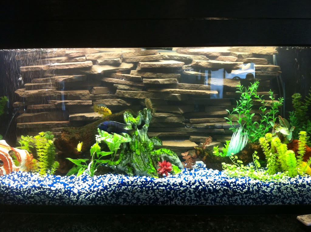 10 gallons planted aquarium with red cherry shrimps IMAGE_66357D9D-B2A8-4C32-938F-F190F8C4ED31
