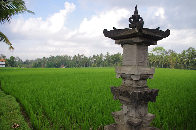 The view from our room to some of Ubud's picturesque rice paddies.