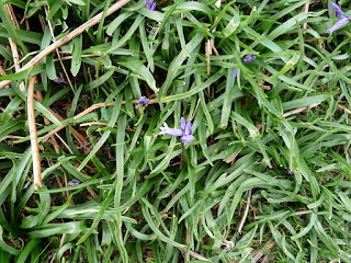 Bluebells not quite out yet!!