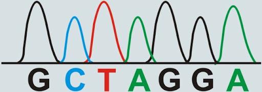 Secuencia de ADN GCTAGGA
