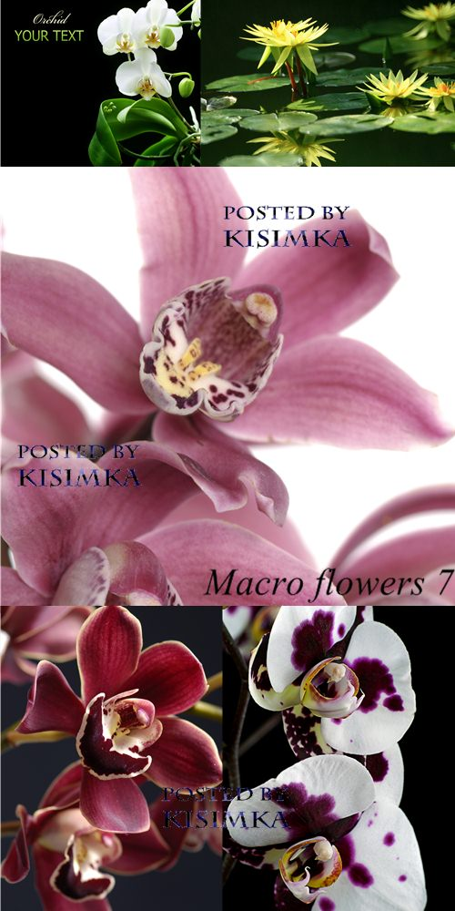 Stock Photo: Macro flower 7