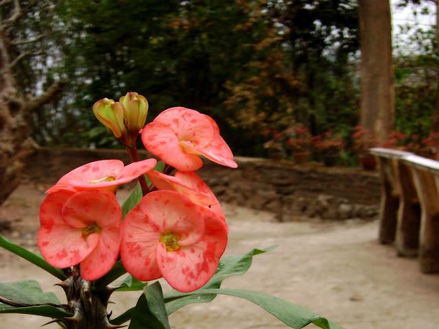 Poisean Flower