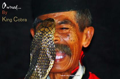 Snake bites a man